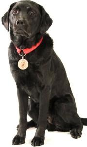 Shazam, U.S. Forensic Accelerant Detection Canine